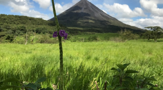 Animals and Adventure in Costa Rica: La Fortuna