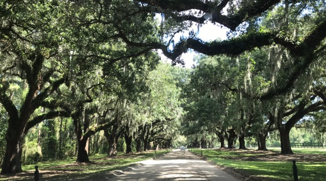 A Visit to Low Country